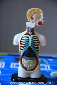 spiegare il corpo umano ai bambini