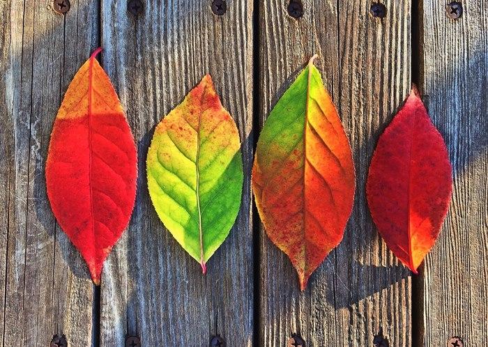 attività montessori autunno, lavoretti, attività creative, progetti