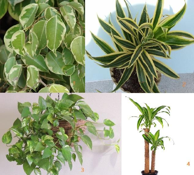 piante che depurano aria in casa