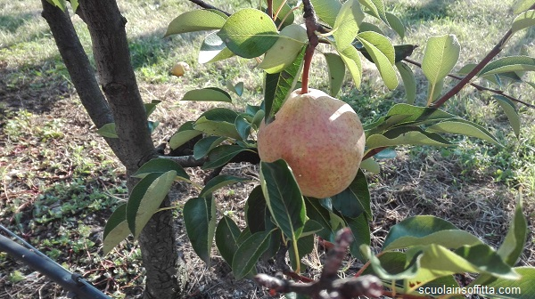 Frutteto Ceriano Laghetto