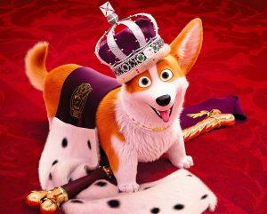 Rex un cucciolo a palazzo