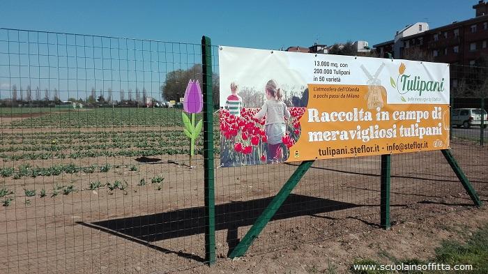 campo tulipani paderno dugnano