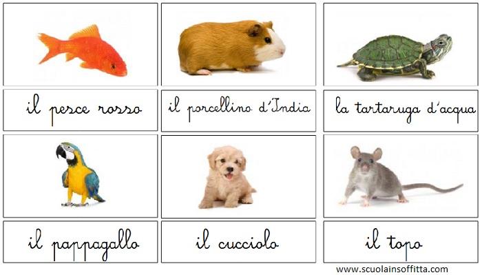 Carte delle nomenclature Montessori da stampare