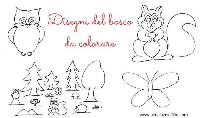 Disegni del bosco da colorare